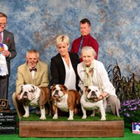 Terrebonne show results: BOB: GCH Deckers Young Gun , BOS : GCH Jolibully Holy Diva,  Select Bitch : GCH Secret To A Kiss ,