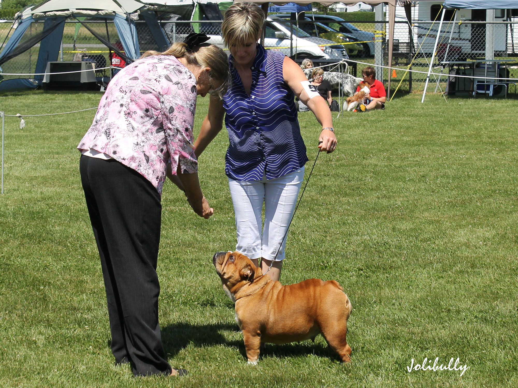Ch Eva Drakes Legacy Of Jolibully. 18 months old.